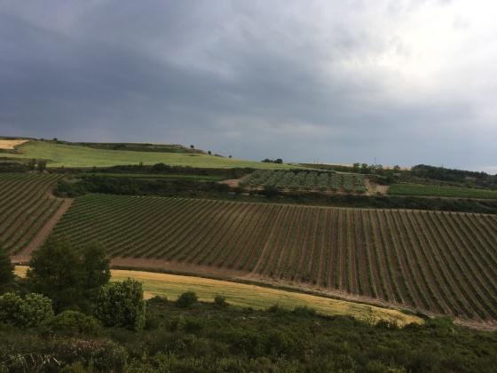 Rioja-Landschaft bei Logrono